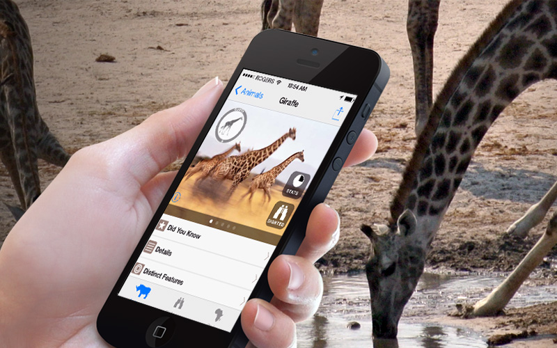 better safari in African