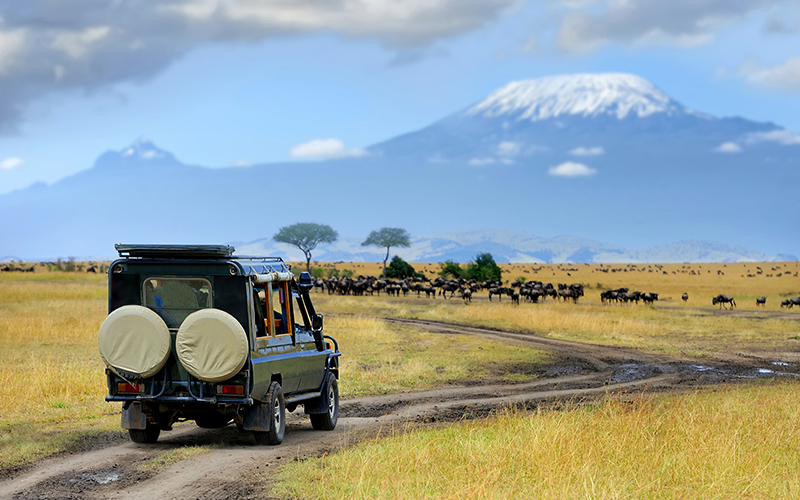 the safari in African