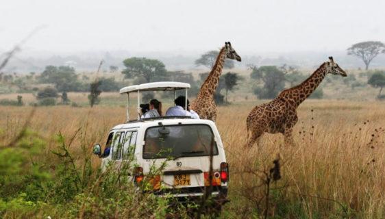 best safari in African