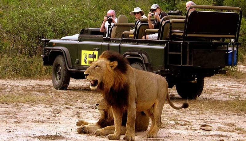 discover safari in African