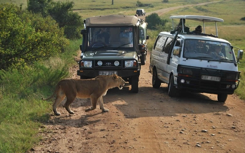 discover Maasai Mara