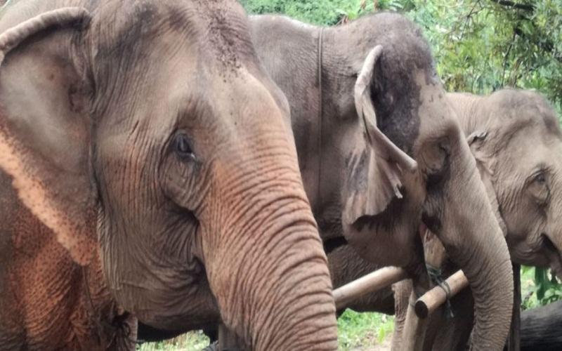 choose the best Elephant Sanctuary
