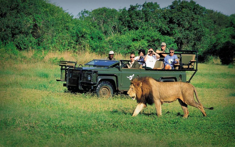 make a low cost safari in Kruger National Park