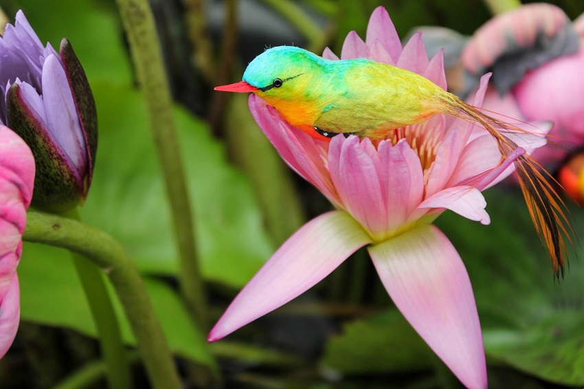 Honeymoon in the Seychelles: when relaxation is tinged with the colors of nature