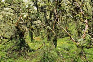 5 fantasy forests in which you will love to lose yourself